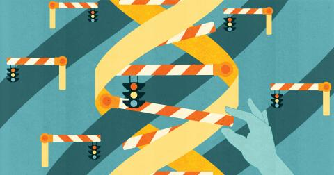 Stoplights, barriers, adn DNA strand